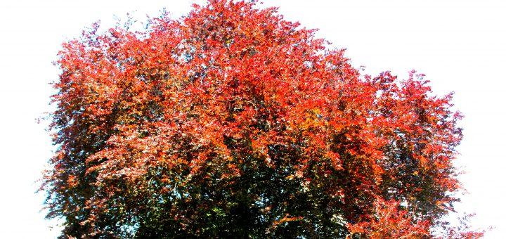 CB Tree
