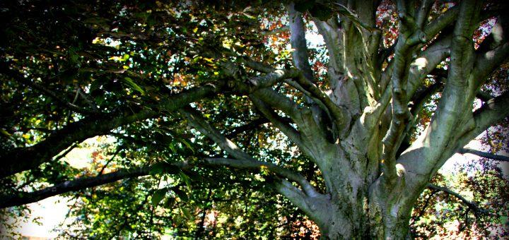 CB Tree 2