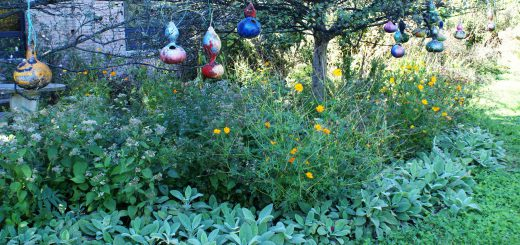 McKinley Wins Garden of Distinction Award from PA Horticultural Society